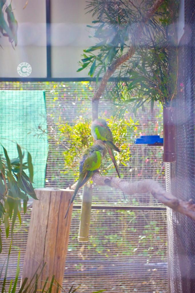 birds at lone pine koala sanctuary