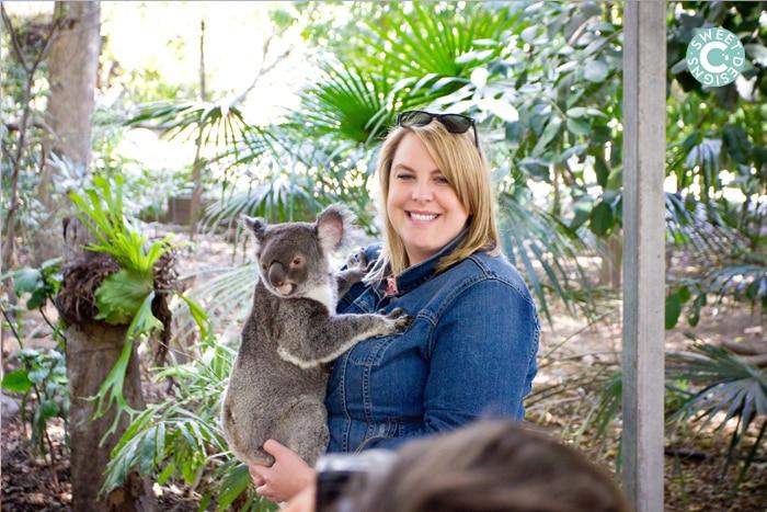 holding a koala at lone pine koala sanctuary