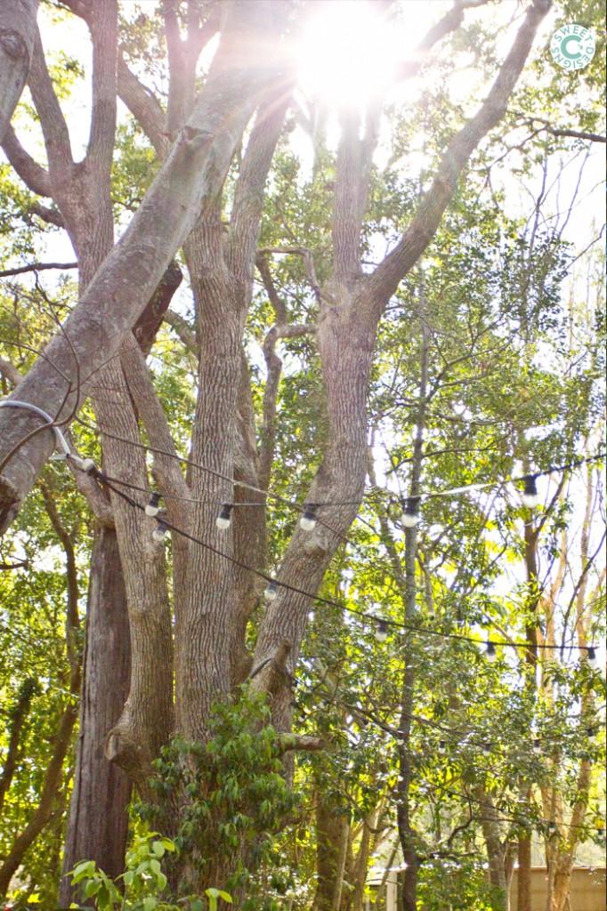 lone pine koala sanctuary in brisbane australia