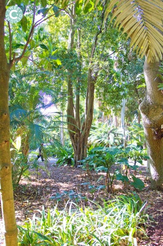 rainforest walk- sydney botanic gardens