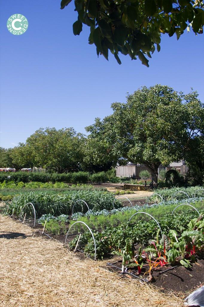 KJ garden tour