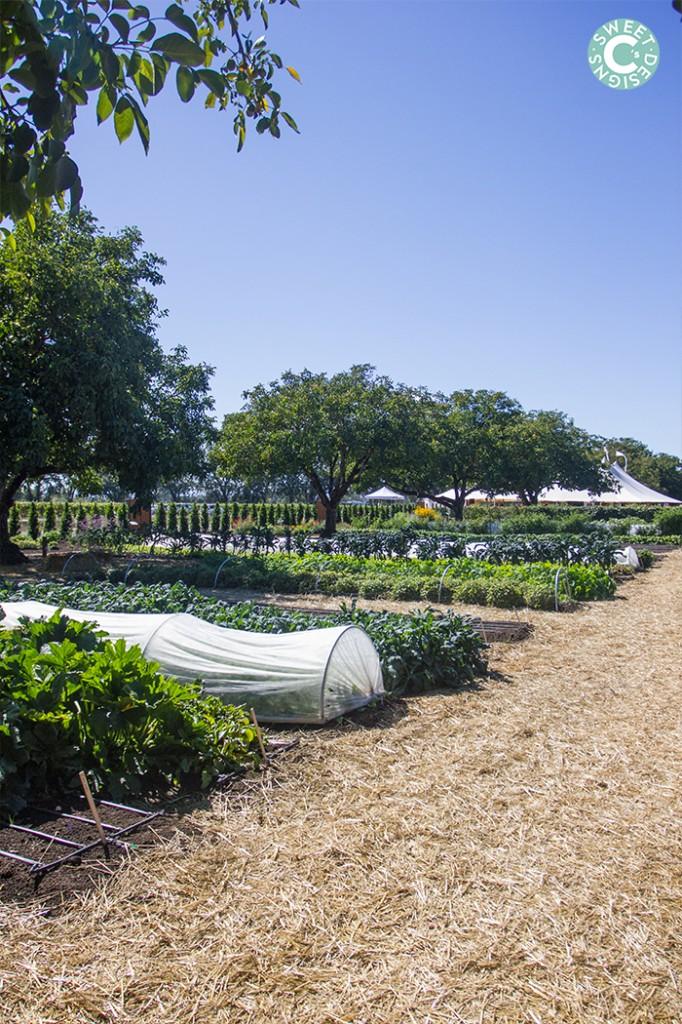 kendall jackson culinary garden