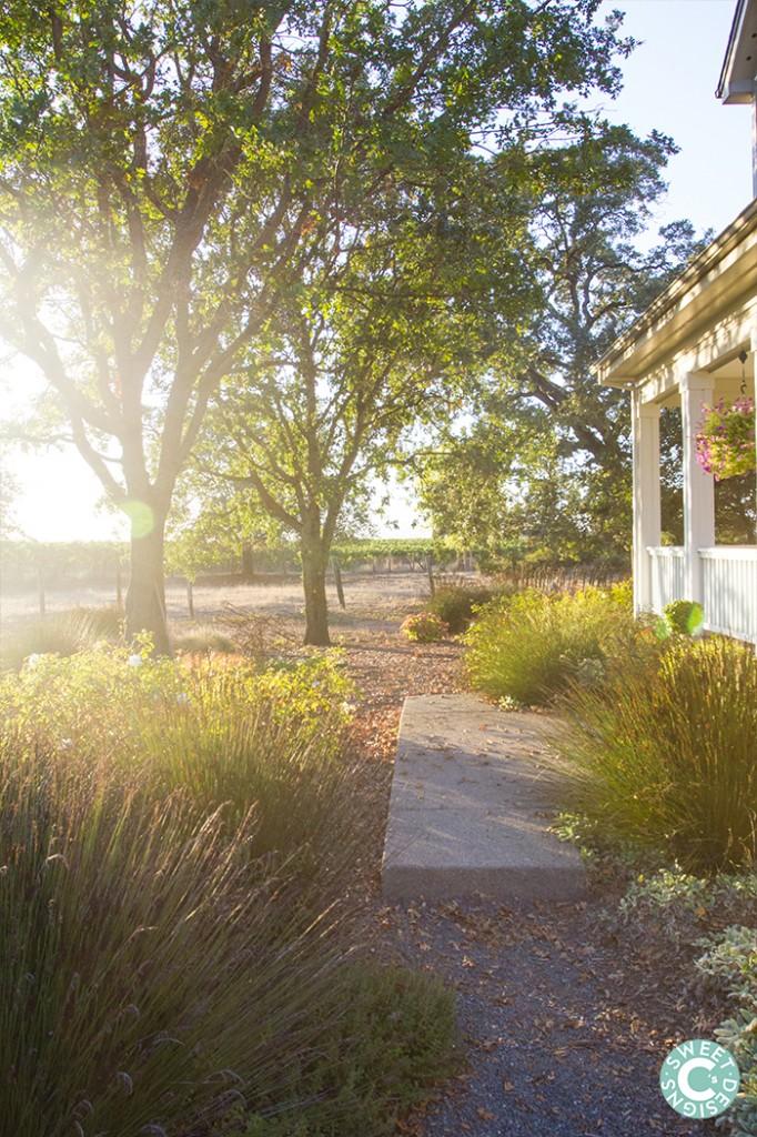 sunset inn the vineyards