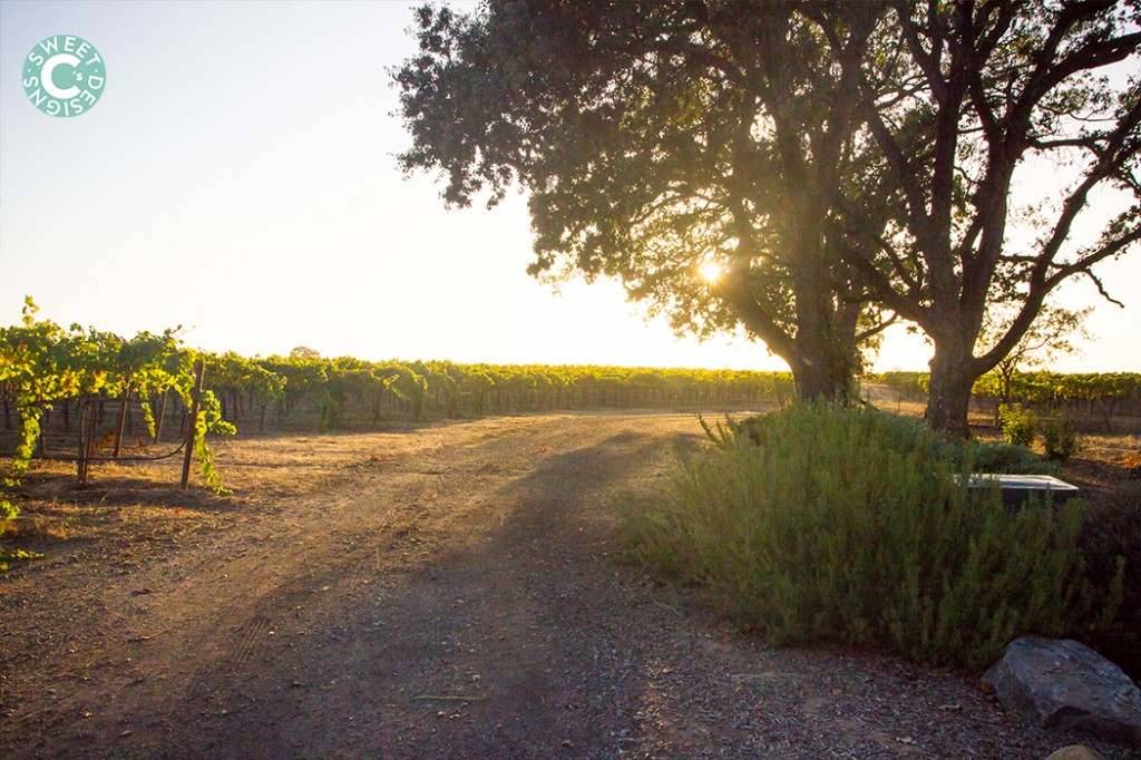 vineyard sunset california