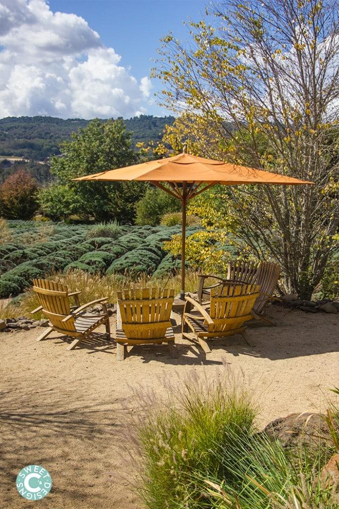 wine barrel chairs at matanzas creek winery