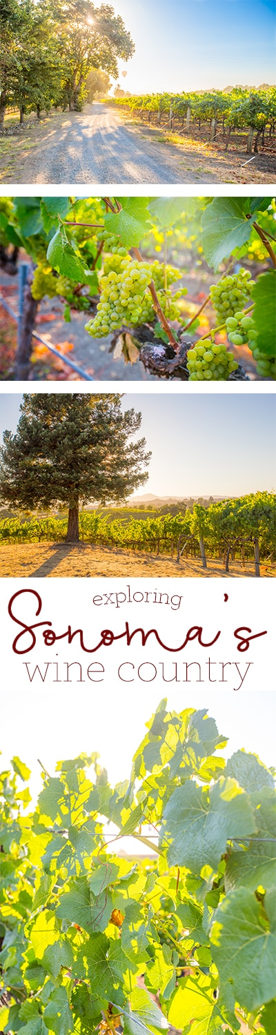 Exploring Sonoma County's Wine Country - my favorite place in California to visit!