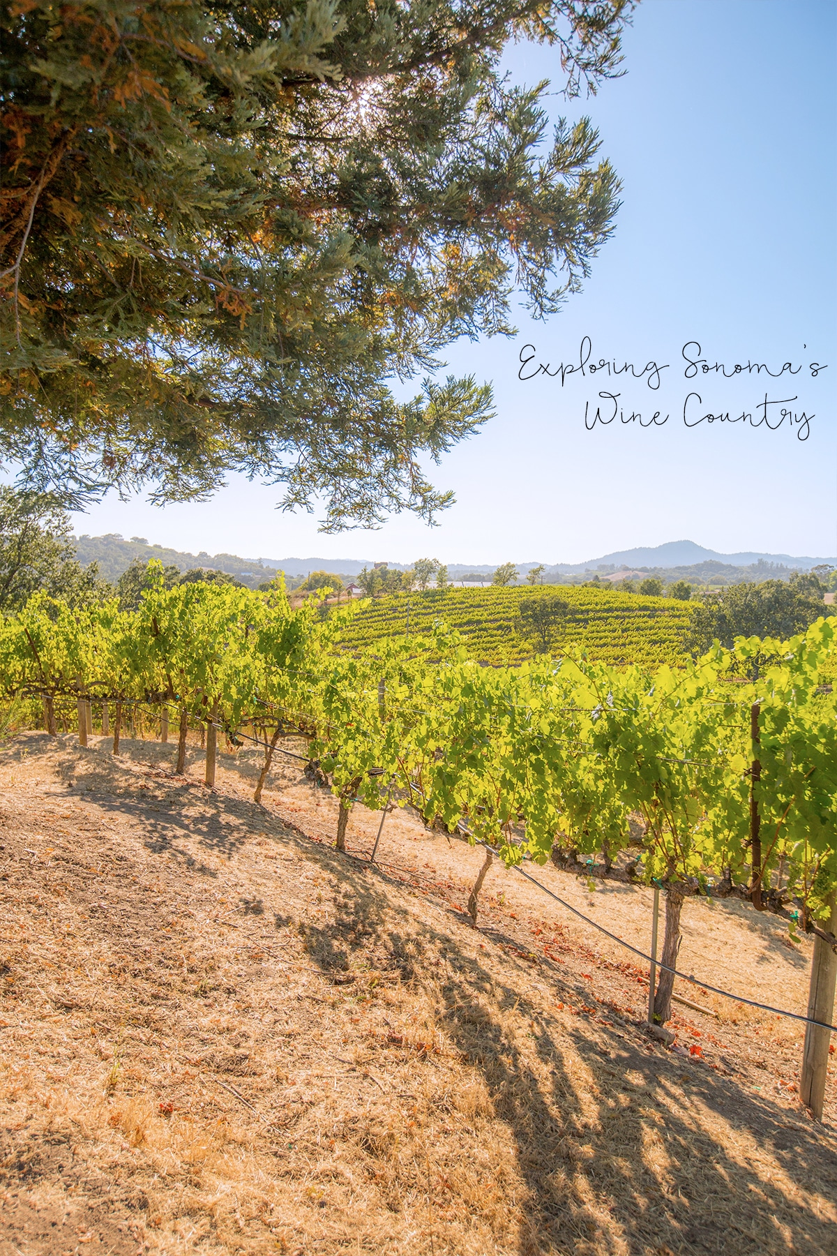 Exploring sonoma's wine country- the most gorgeous place in California!