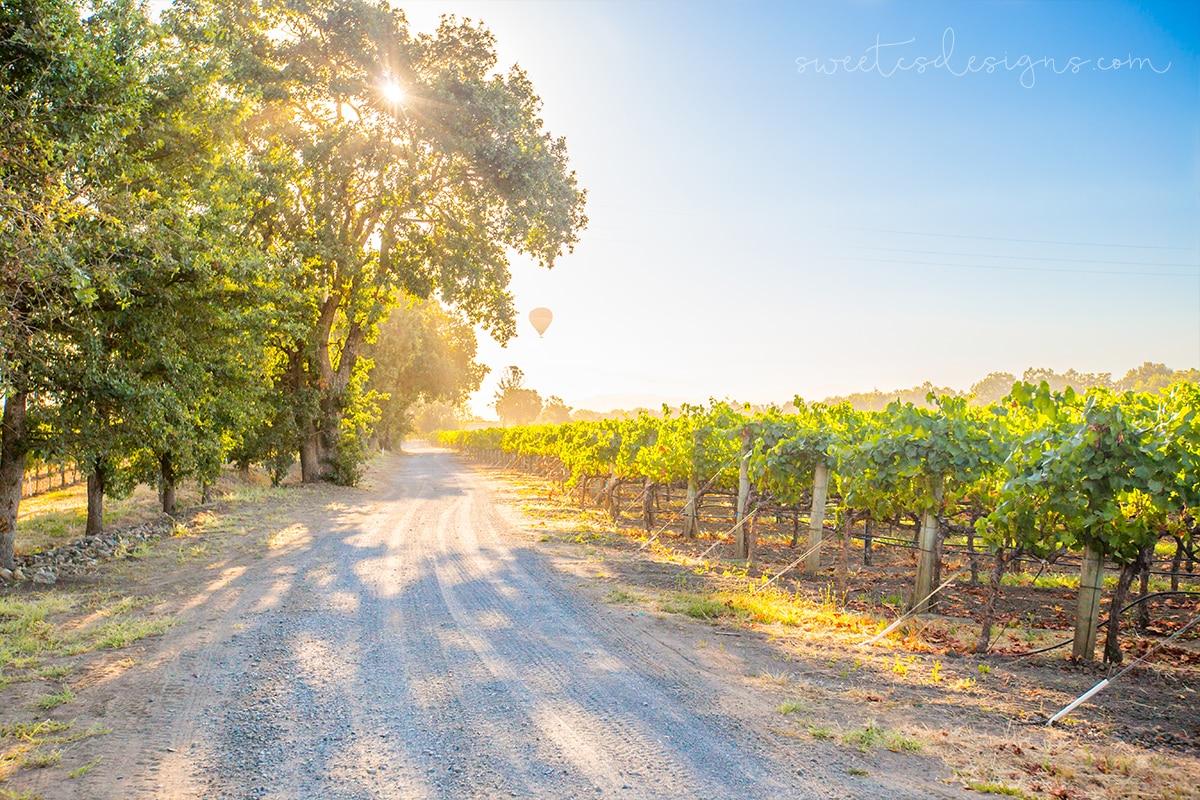 Sunrise in the vineyard- La Crema winery