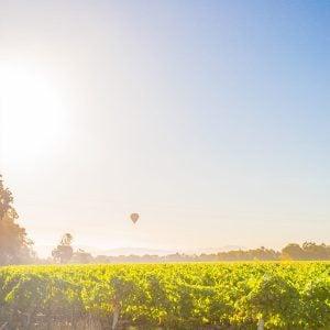 Exploring Sonoma's Wine Country