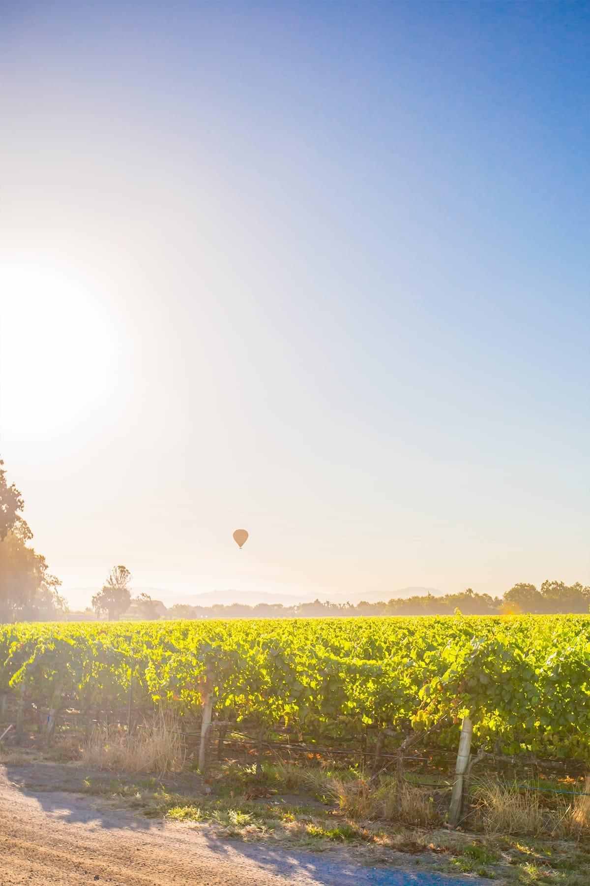 Sunrise over the vineyards at La Crema