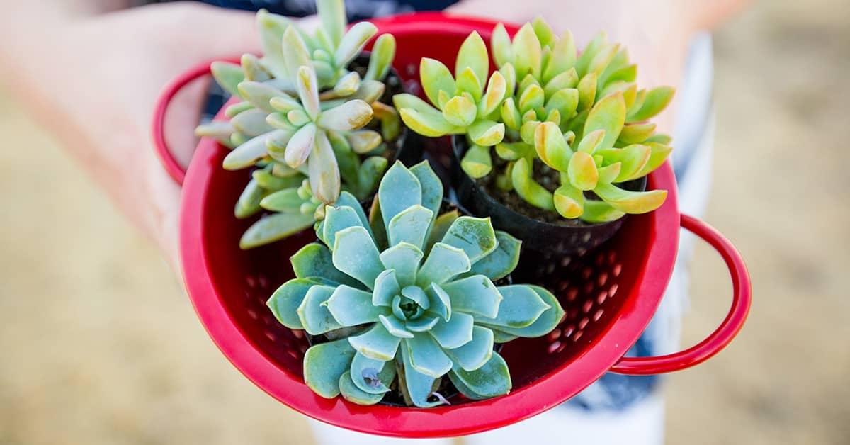 fb plant pot