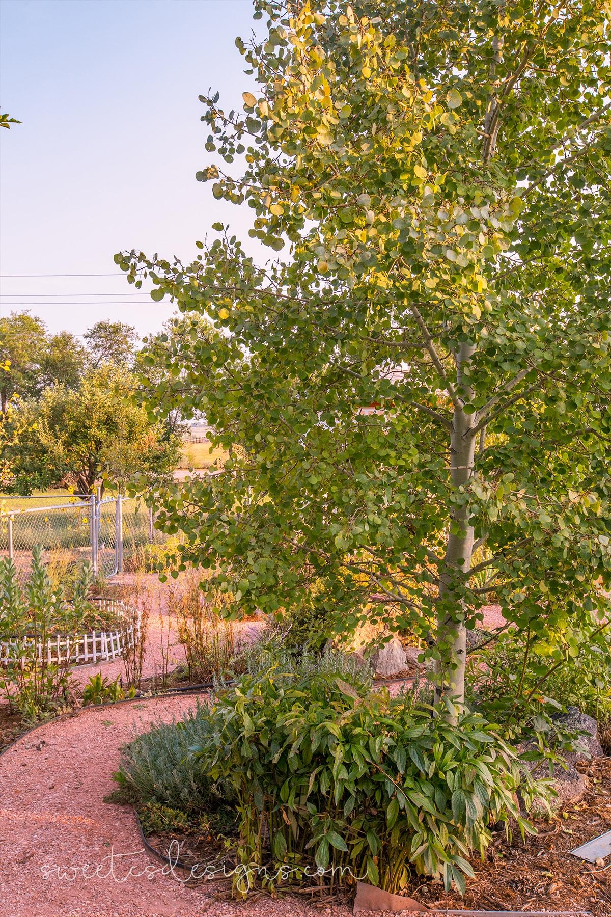 odell garden