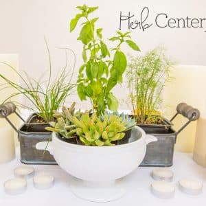 Easy Herb Centerpieces