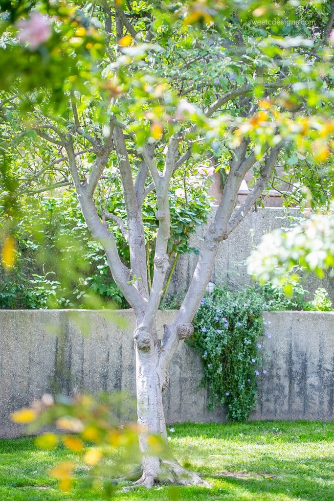 This gorgeous garden at a home in the Hollywood hills is so stunning!
