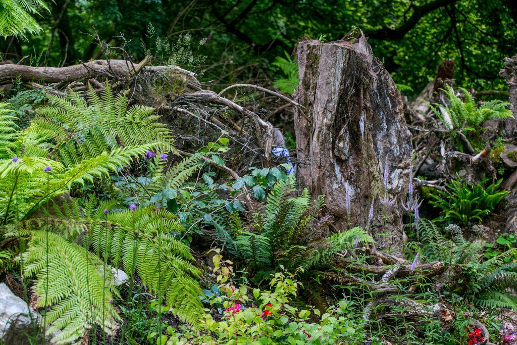 pests on Irish Moss (0) | Miniature garden, Hgtv garden ...  |Fairy Garden Ideas Ireland