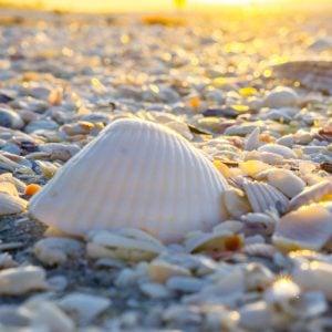 Visiting Sanibel Island Florida – Why to Pick Sanibel for a Beach Getaway!