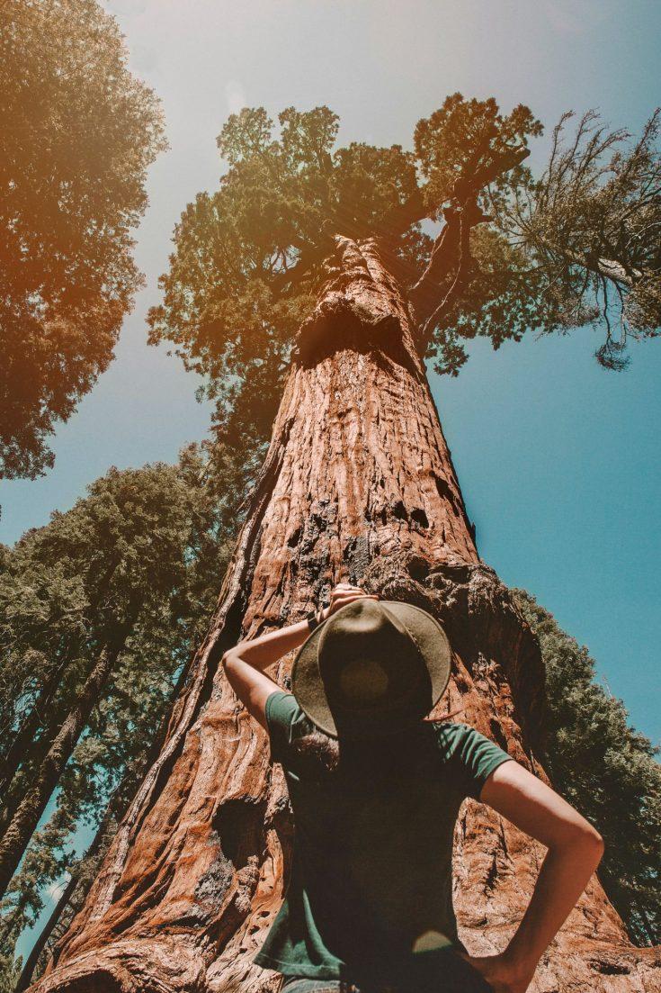 Natural Wonders | Visit California | Visit California Road Trips
