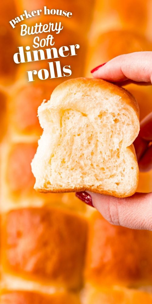 picture of hand holding parker house dinner roll
